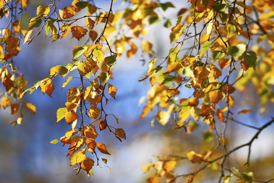 O início do Outono
